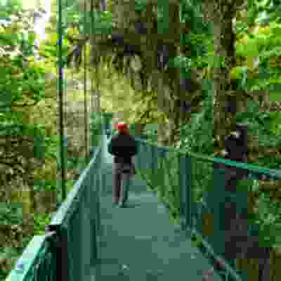 Cloud forest walk in Monteverde