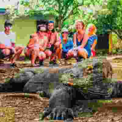 Get up close the amazing Komodo Dragons