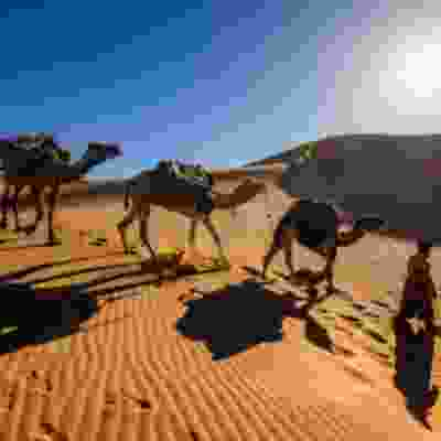 View more information about Experience Morocco